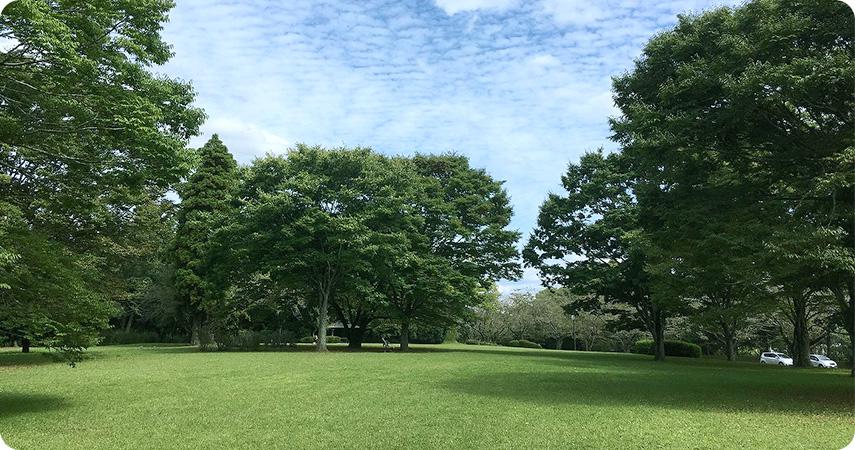 公園の写真1