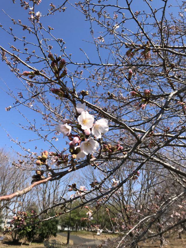 千葉県立 北総花の丘公園公園だより