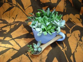 主催イベント:【みどりの教室】多肉植物の寄せ植えの画像