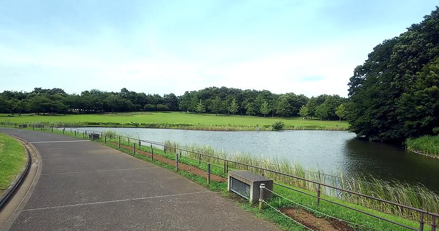 公園の写真4
