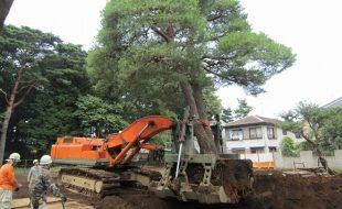 三鷹野鳥の森プロジェクトに伴う重機移植工事