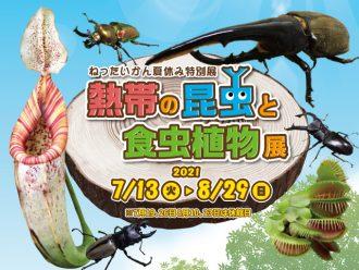 主催イベント:夏休み特別展「熱帯の昆虫と食虫植物」の画像