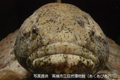 高槻の生きものにふれ隊 -魚の顔ー