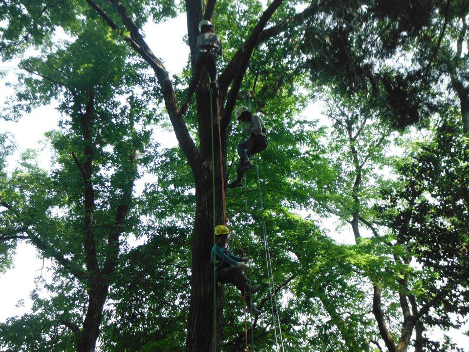 ツリーイング 木登り体験