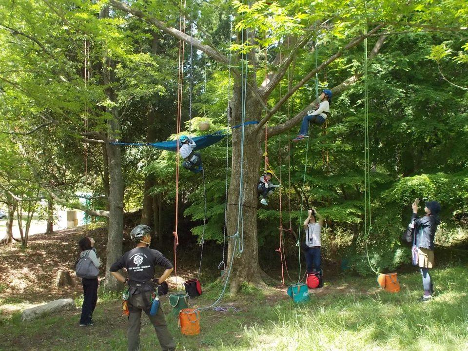 ツリーイング ~木のぼり体験~