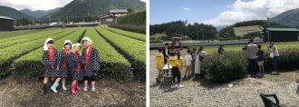 主催イベント:家庭の日応援プロジェクト6月~お茶農家でお茶摘み体験~は、中止といたします。の画像