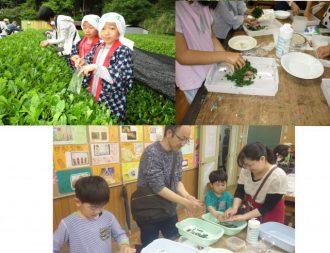 主催イベント:お茶摘み・お茶もみ体験の画像