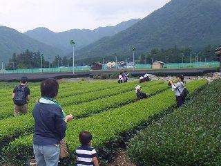 主催イベント:家庭の日応援プロジェクト 6月(お茶農家でお茶摘み体験)の画像